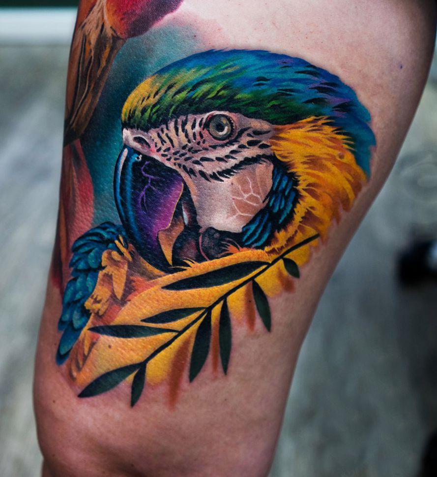 zółta papuga