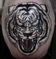 white tiger head tattoo